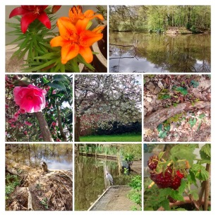 _20140410_200033-COLLAGE (1)